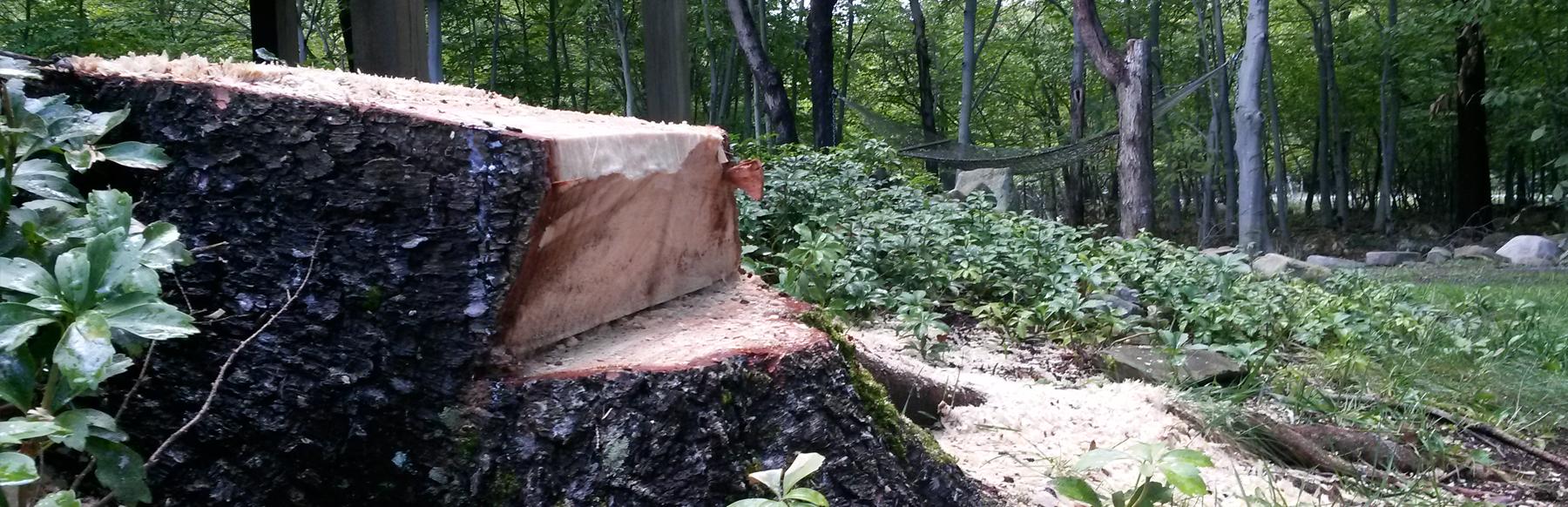 Tree Removal - Tobyhanna PA